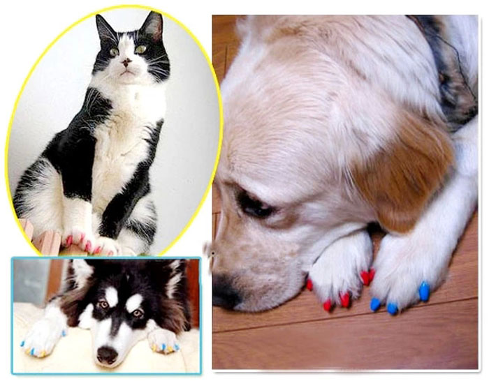 20pcs Pet Nail Wrap Paws Claw Protector Cover