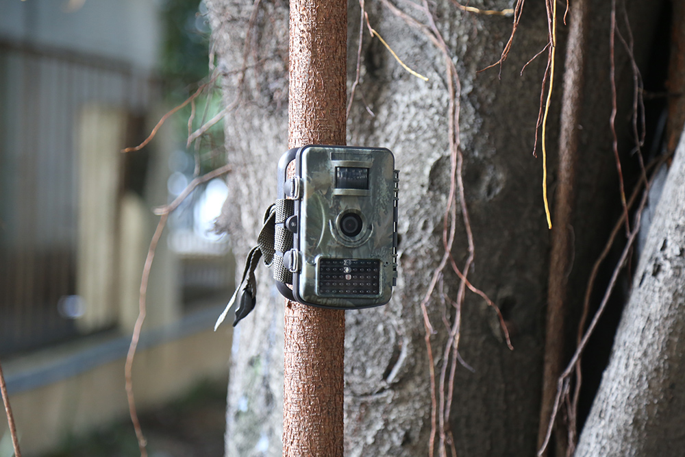 RD1001 1080P HD 100 Degree Wide Angle 850nm Motion Detection Outdoor Hunting Trail Camera