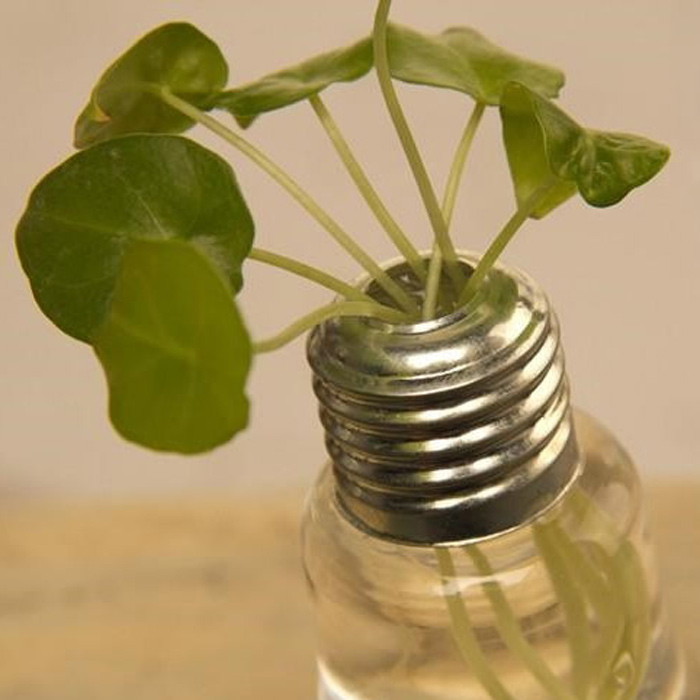 Creative Bulb Style Hanging Glass Vase Hydroponic Plants Flower Container