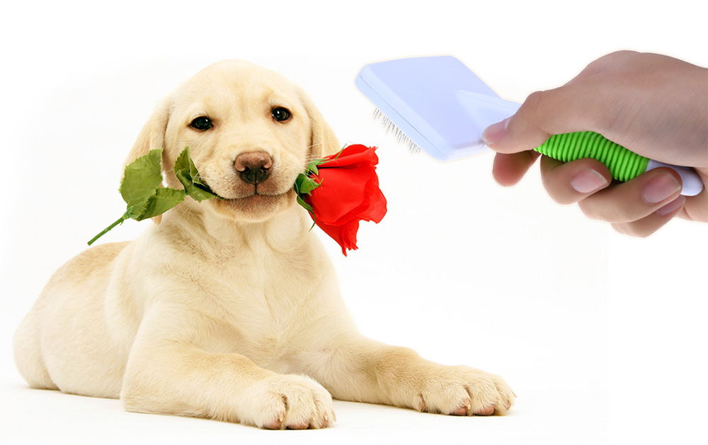 Pet Hair Fluffy Removal Comb Dog Cat Puppy Grooming Tool for Teddy Golden Retriever